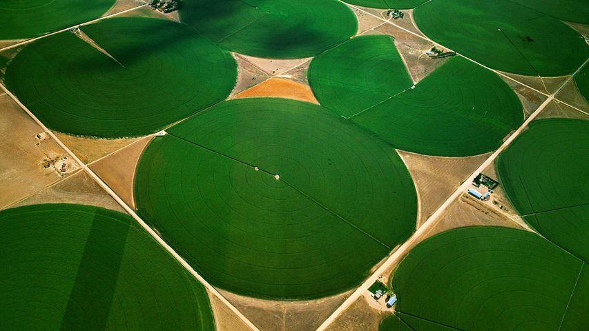 圆形农田,科罗拉多州摩根县