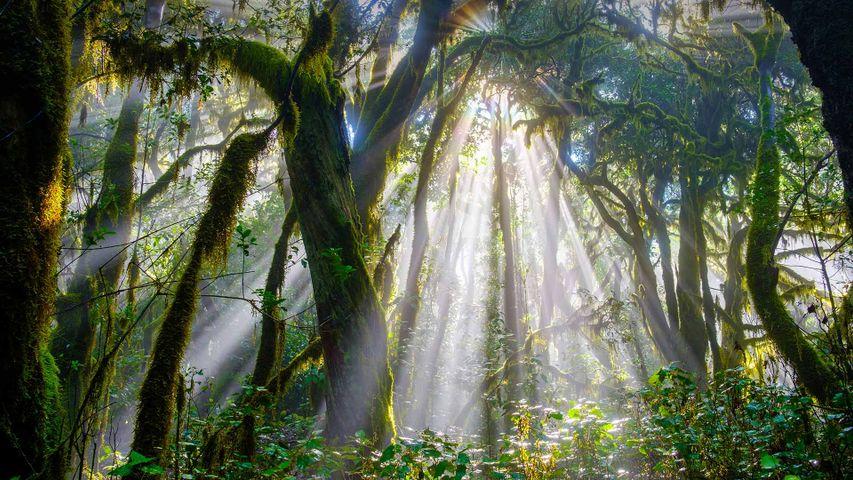 「ガラホナイ国立公園」スペイン, カナリア諸島