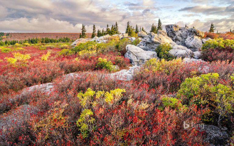 grass outdoor landscape nature mountain flower field sky