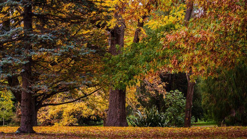 tree outdoor grass maple fall deciduous landscape autumn