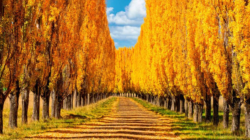 Autumn colours in New England, New South Wales
