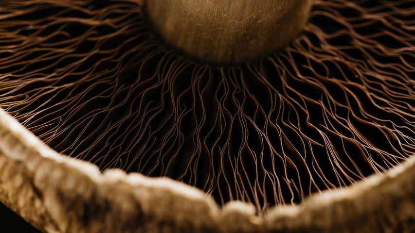 Detail of a portobello mushroom