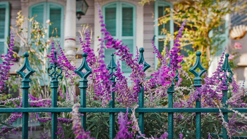 Flowers and an ironwork fence in front of a house in New Orleans, Louisiana