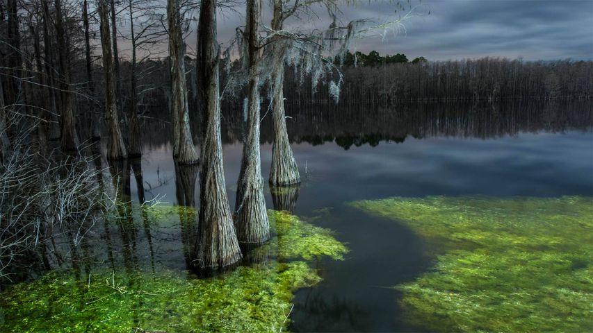 Pine Log State Forest, Florida, USA