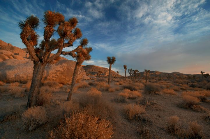 grass sky outdoor desert cloud palm tree landscape plant