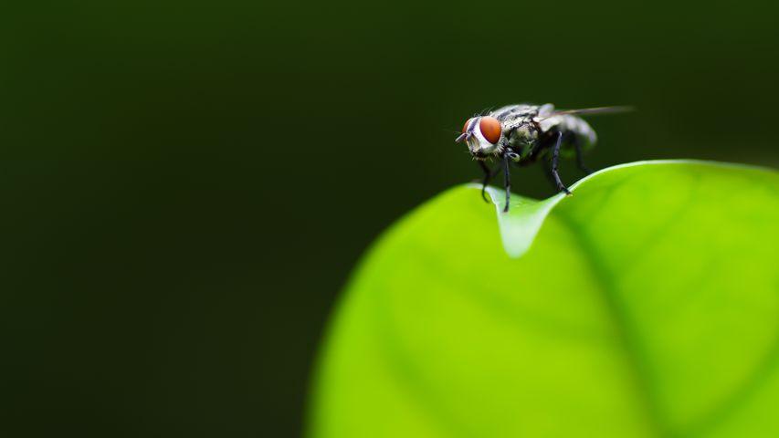 invertebrate bee beetle animal dragonfly macro photography arthropod pest