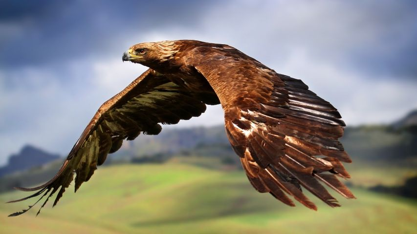 bird sky animal outdoor falcon bird of prey accipitridae hawk