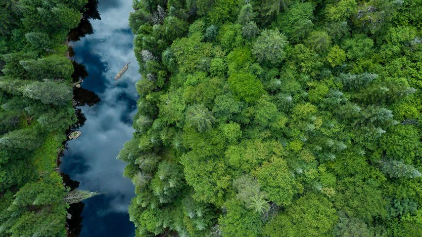 Aerial View of Boreal Forest in summer, Quebec