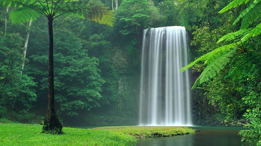 tree nature grass outdoor water waterfall plant forest