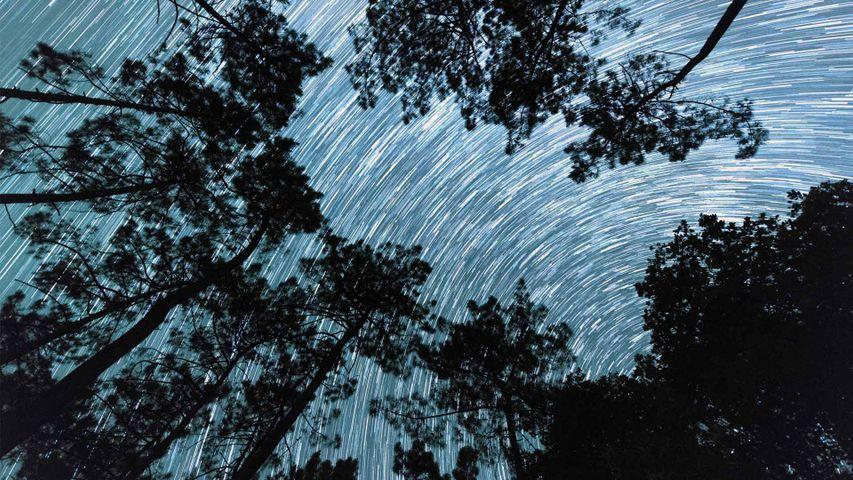 Trainée d'étoiles depuis les racines d'un bosquet de pins en Dordogne