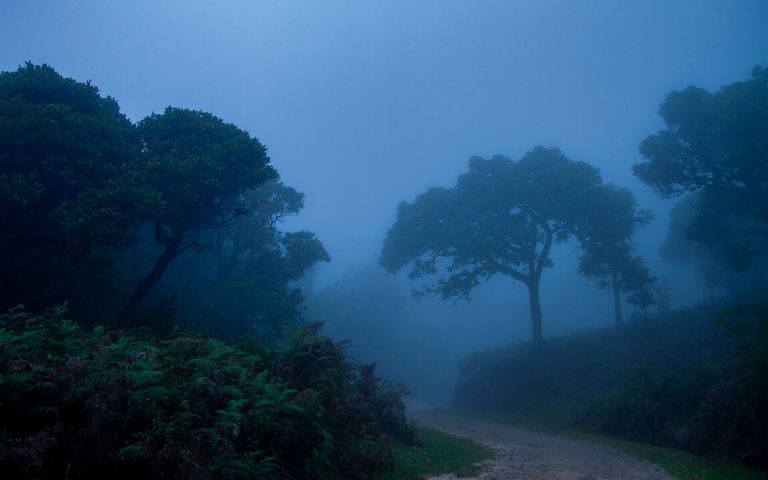 tree fog outdoor nature sky landscape green forest