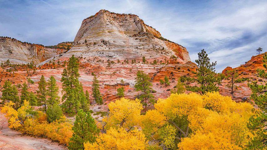 Autumn colours in Zion National Park, Utah