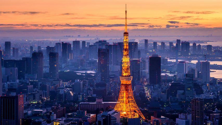 Tour de Tokyo  Minato, Tokyo, Japon