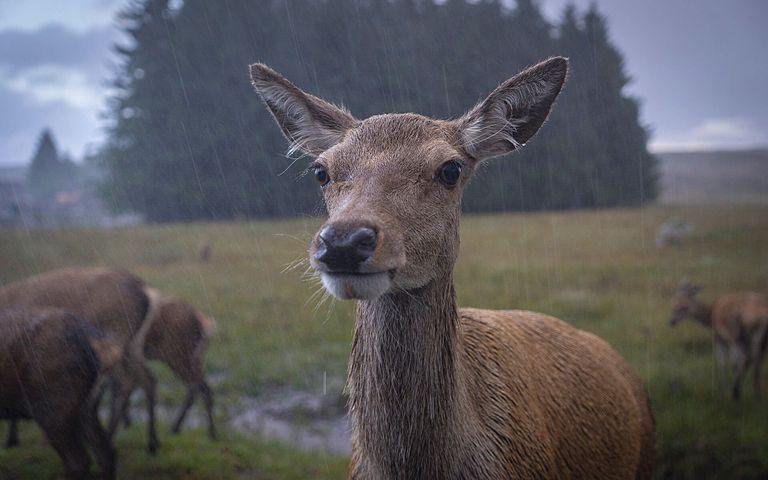 Monsoons Windows 10 Theme