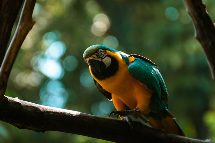 tree outdoor bird animal sitting branch perched colorful