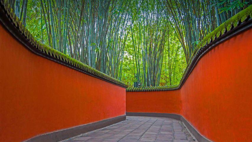 武侯祠内红墙和竹林掩映下的小巷,中国成都