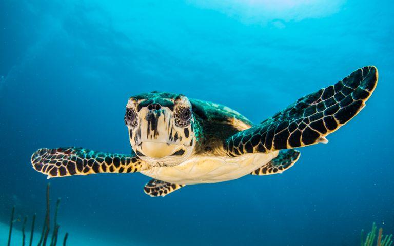 reptile turtle animal sky outdoor fish reef blue