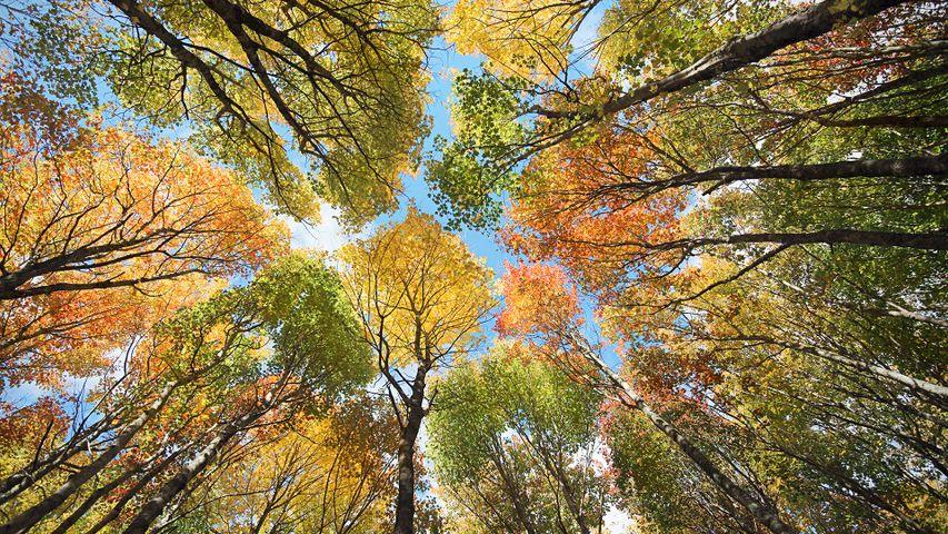 爱德华王子岛的森林和树冠,加拿大
