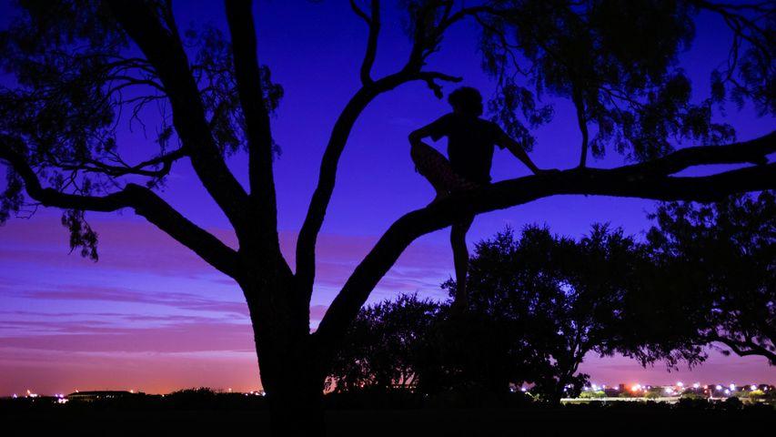 tree outdoor sky plant silhouette